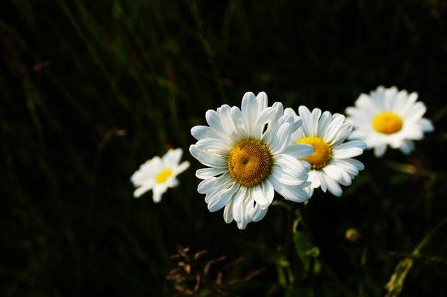 pexels-photo-114137